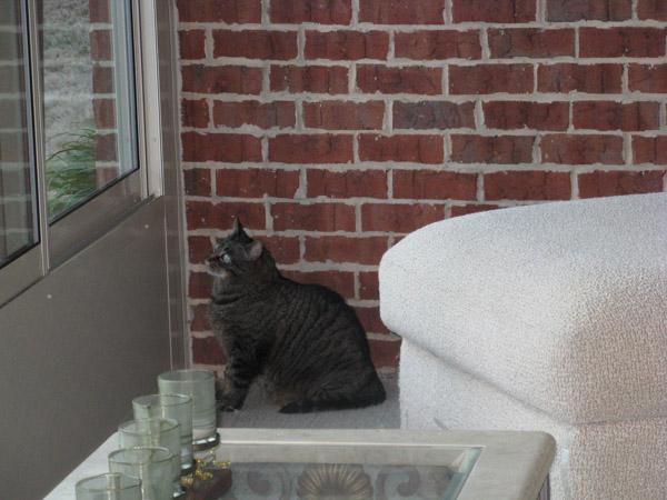 Cooper in sunroom