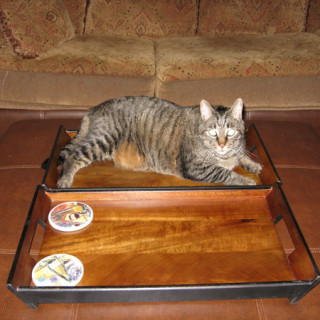 Cooper on tray