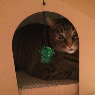 Cooper in cat house