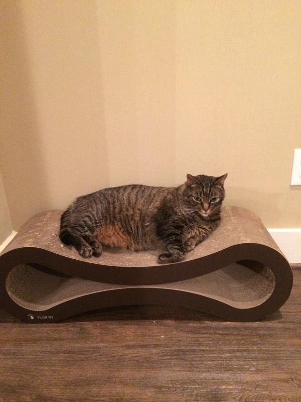 Cooper on Fusion cat scratcher