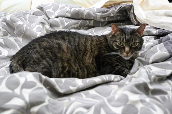Cooper Still on bed