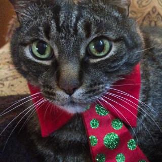 Cooper in His Christmas Tie
