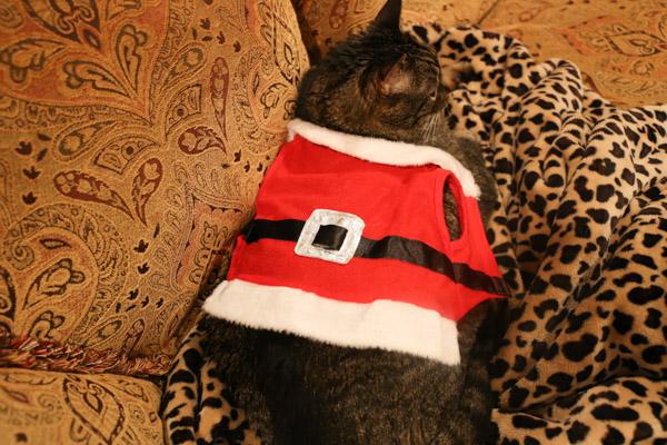 Cooper in Santa Suit