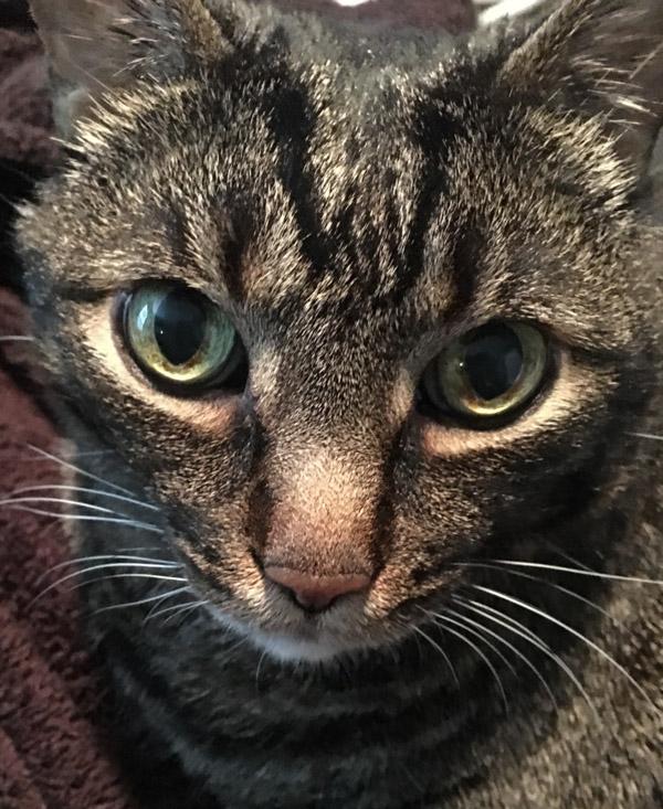 Cooper up close
