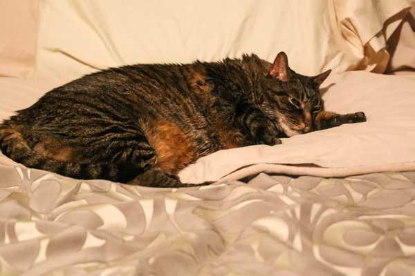 Cooper in bed