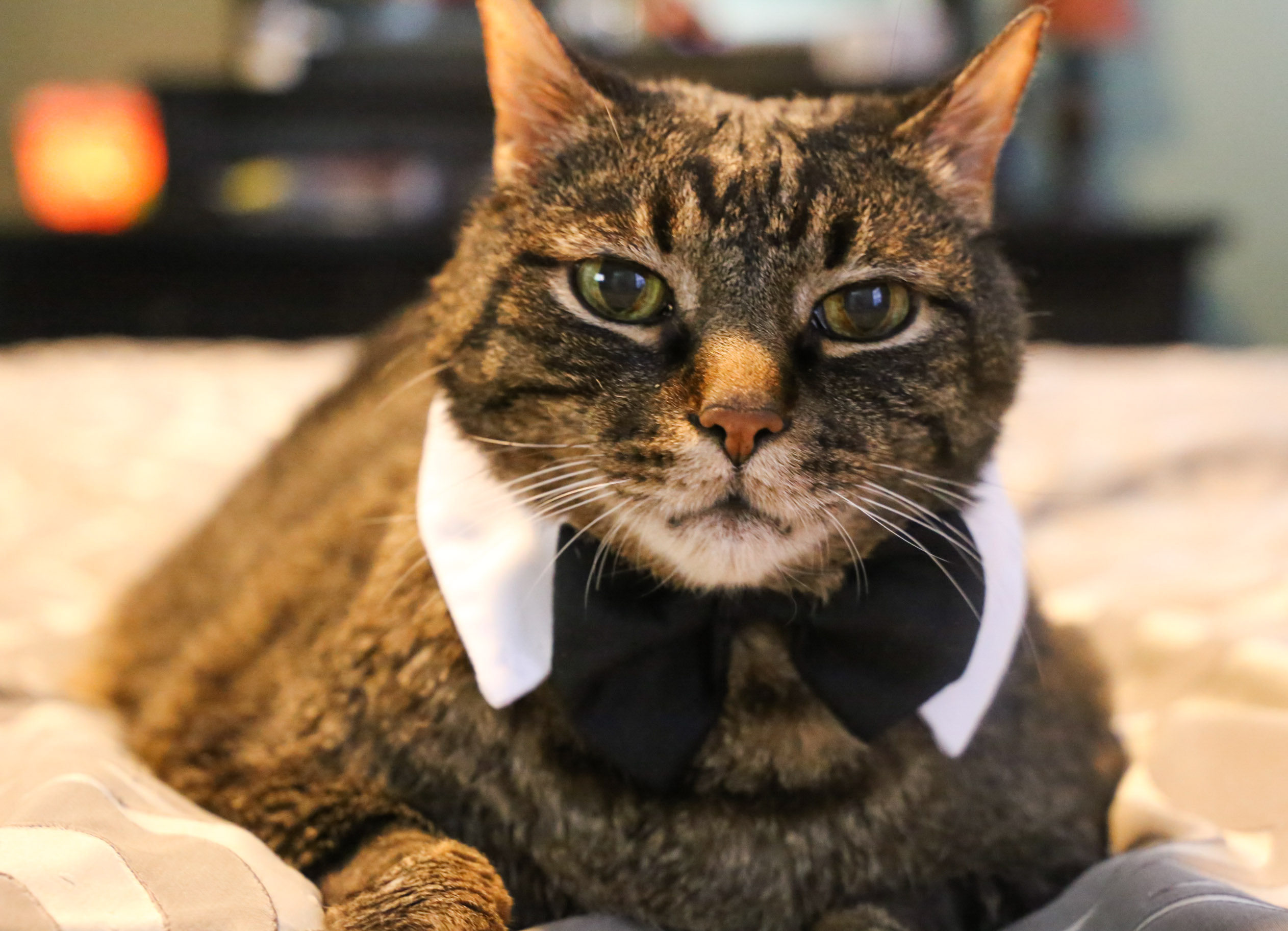 Cooper with black tie