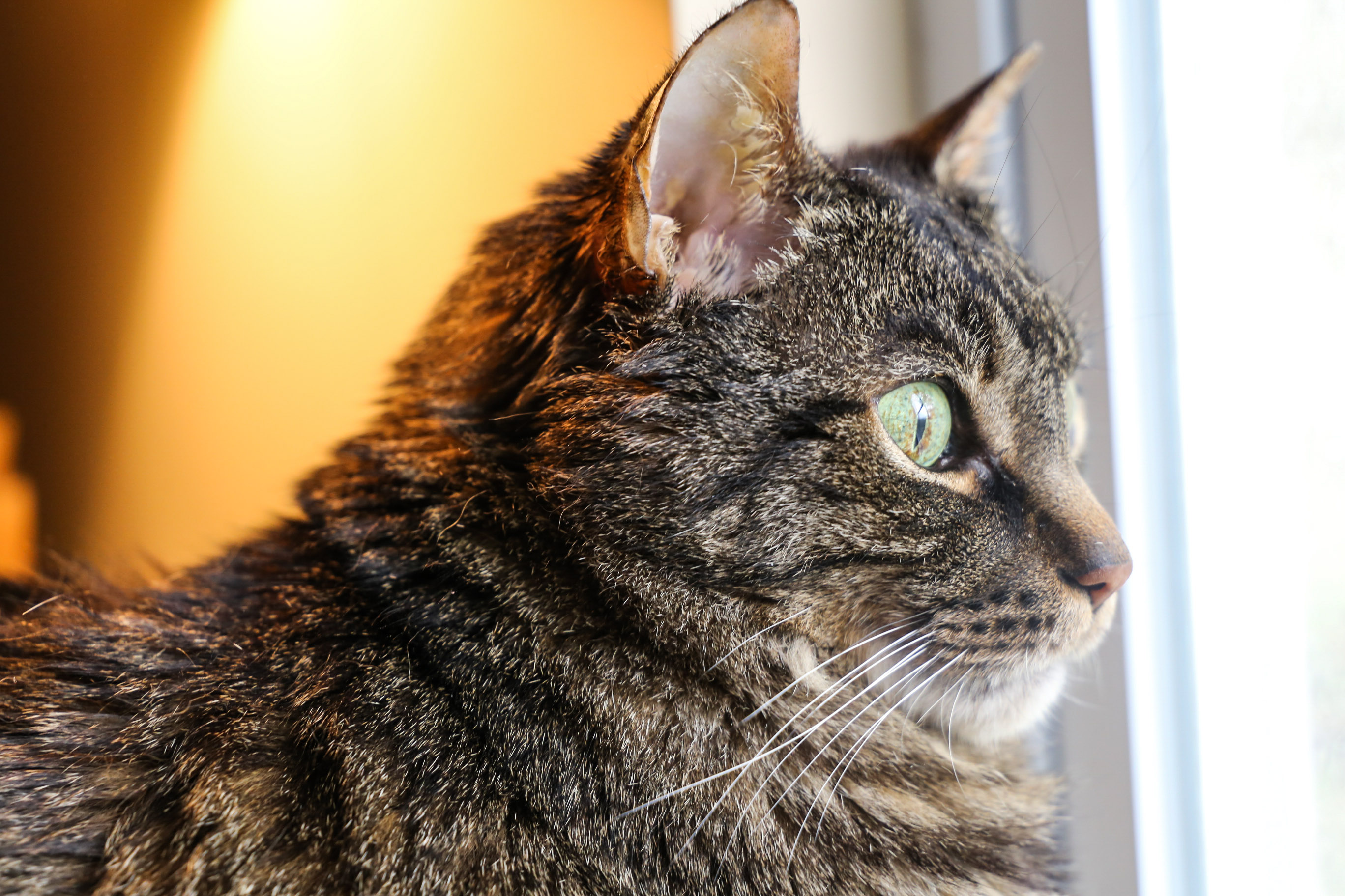 Cooper side profile