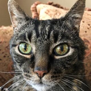 Cooper's eyes
