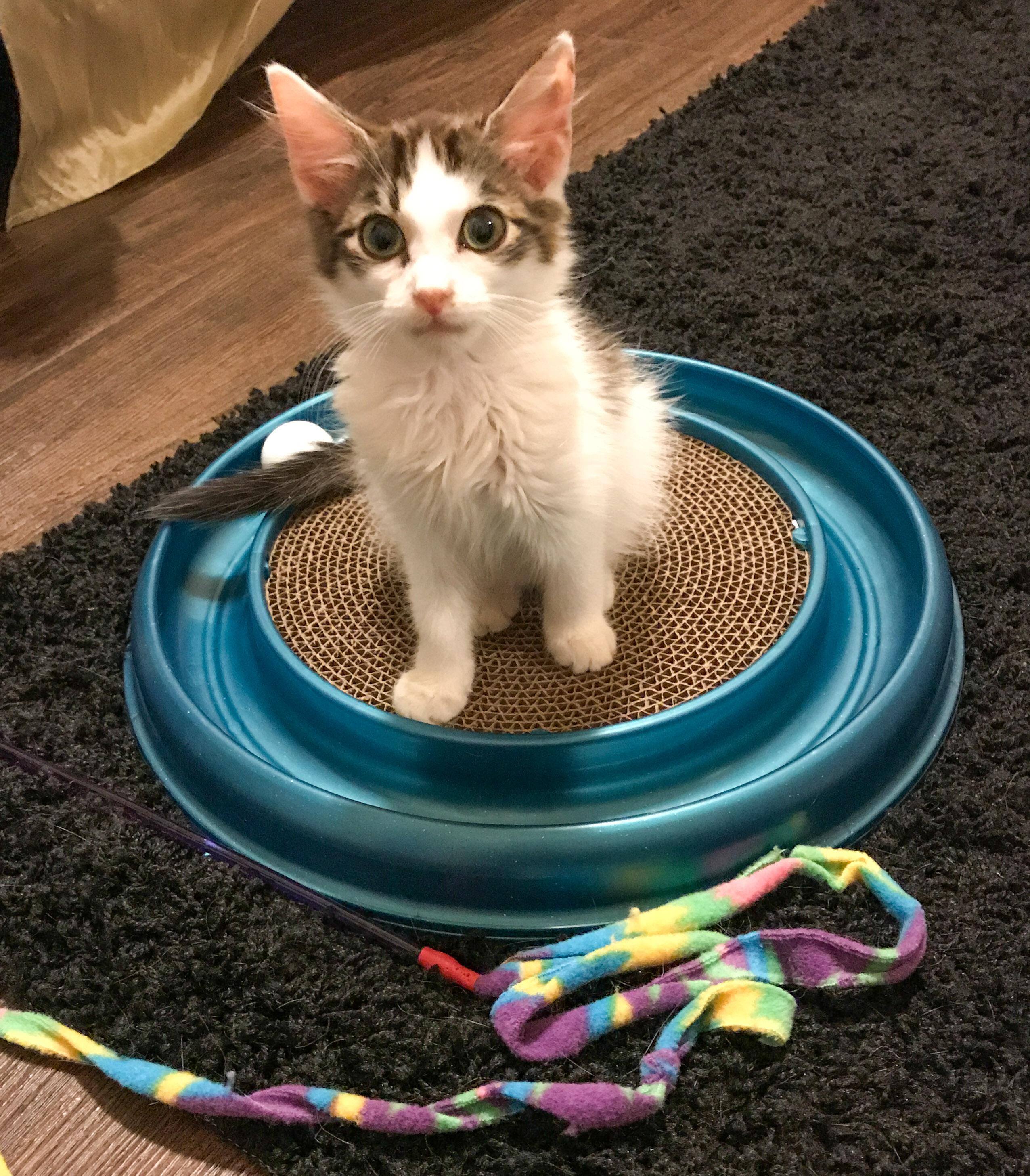 Saving Grace Rescue Kittens