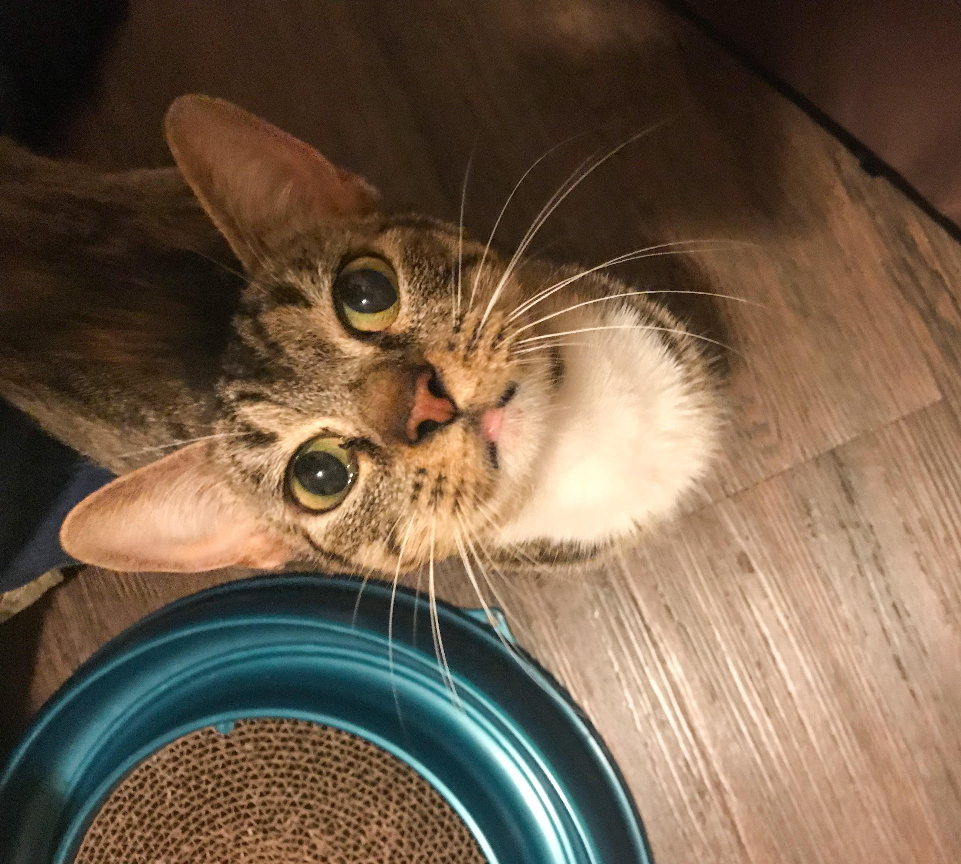 Feline Friday #7