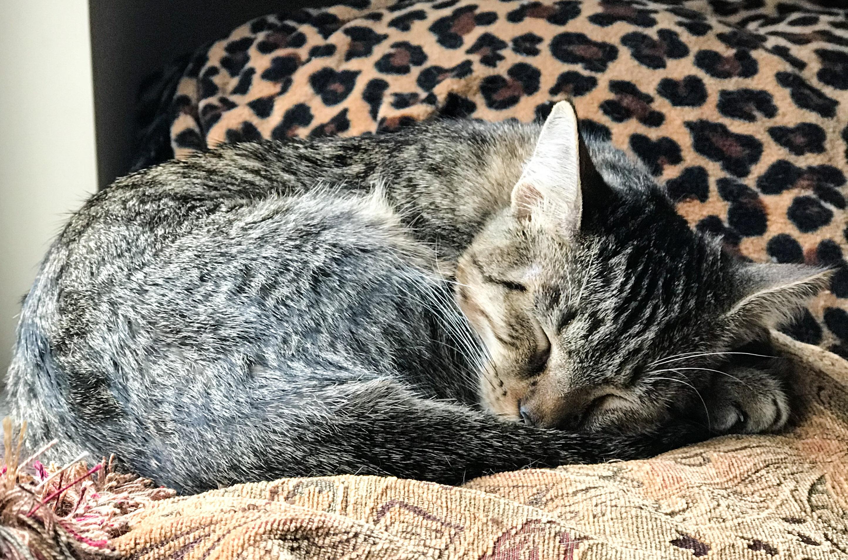 Ranger Sleeping