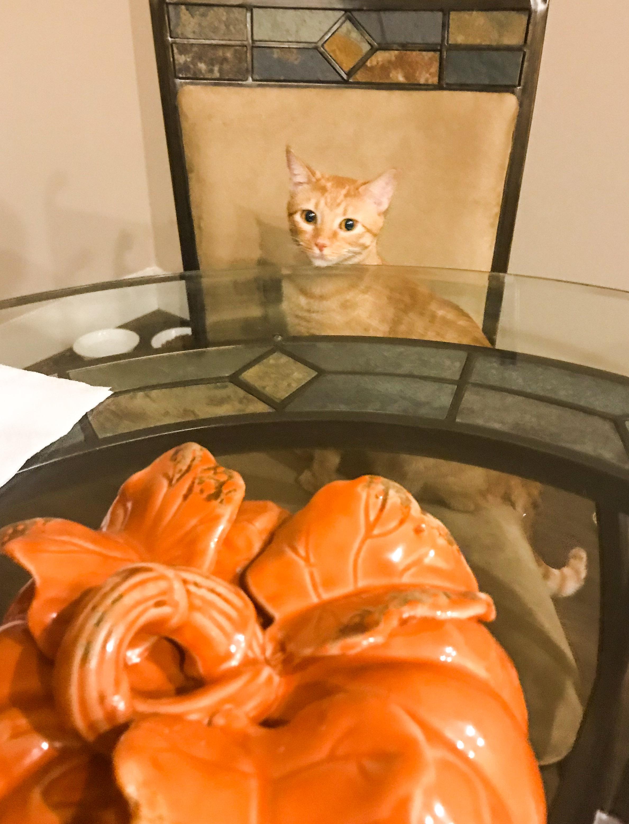 Marmalade at the table