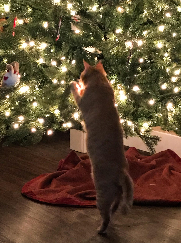 Marmalade & Christmas Tree
