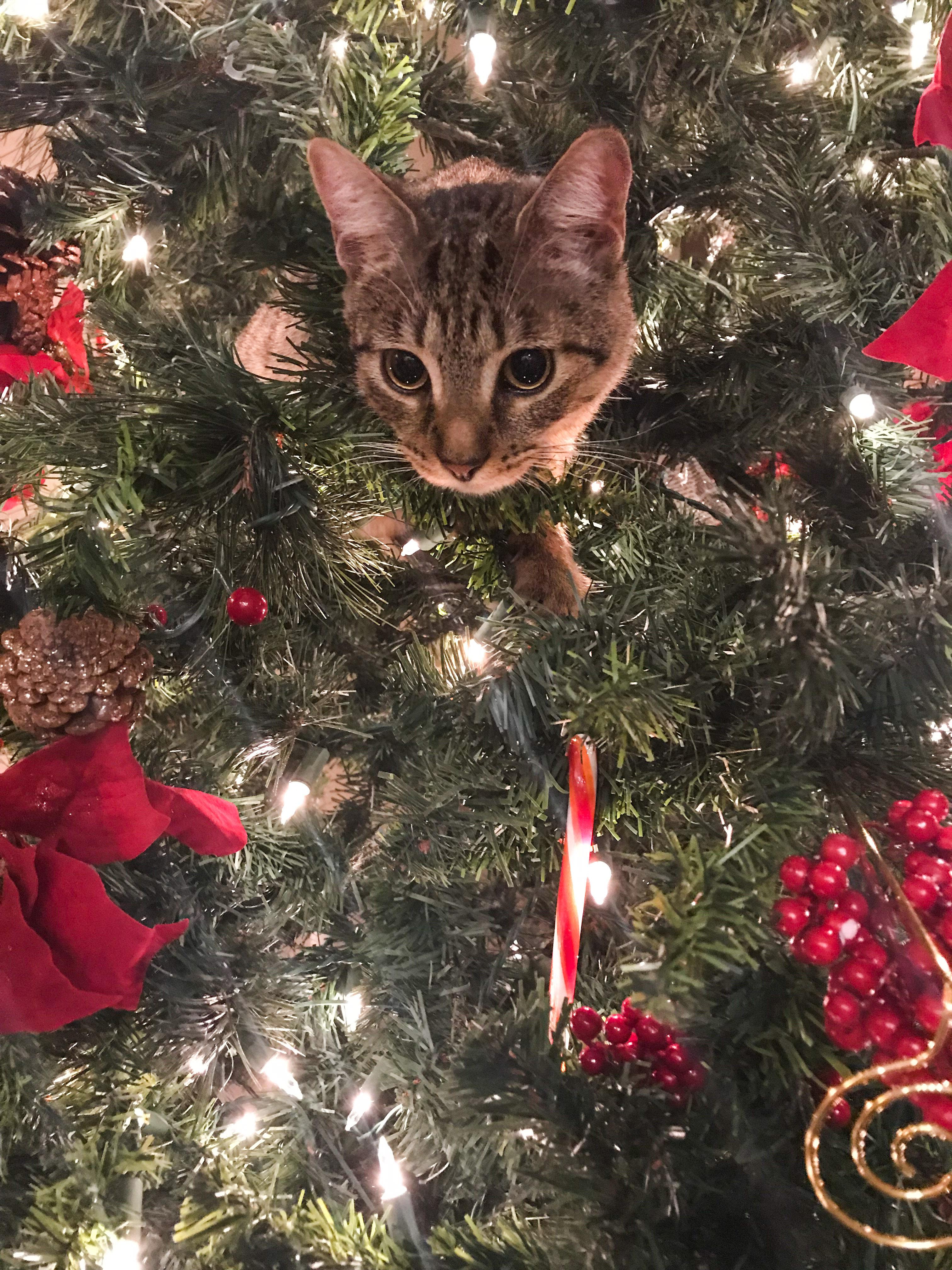 Ranger in Christmas Tree
