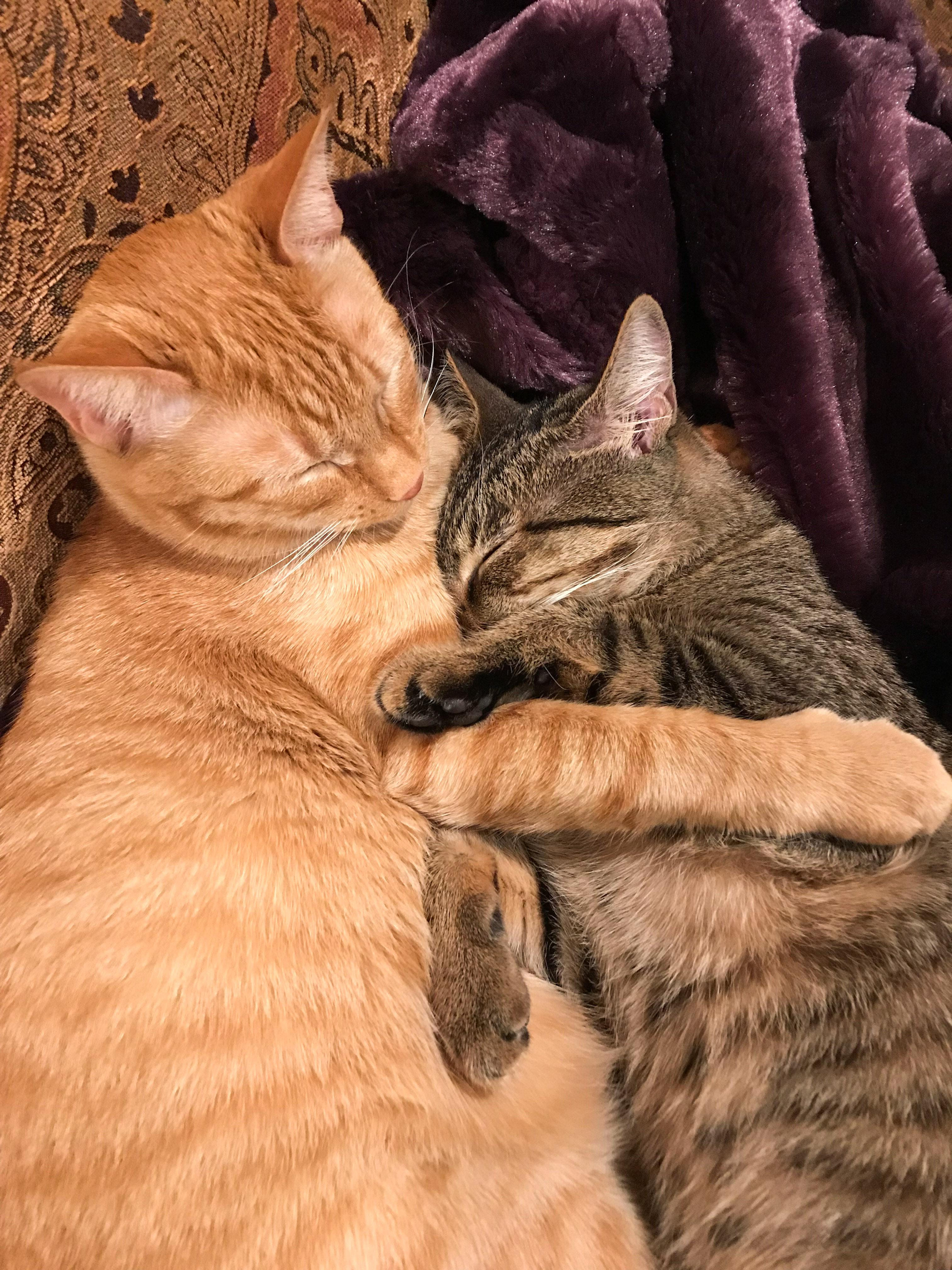Ranger & Marmalade Cuddled Together