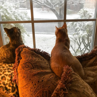 Ranger & Marmalade watching the snow