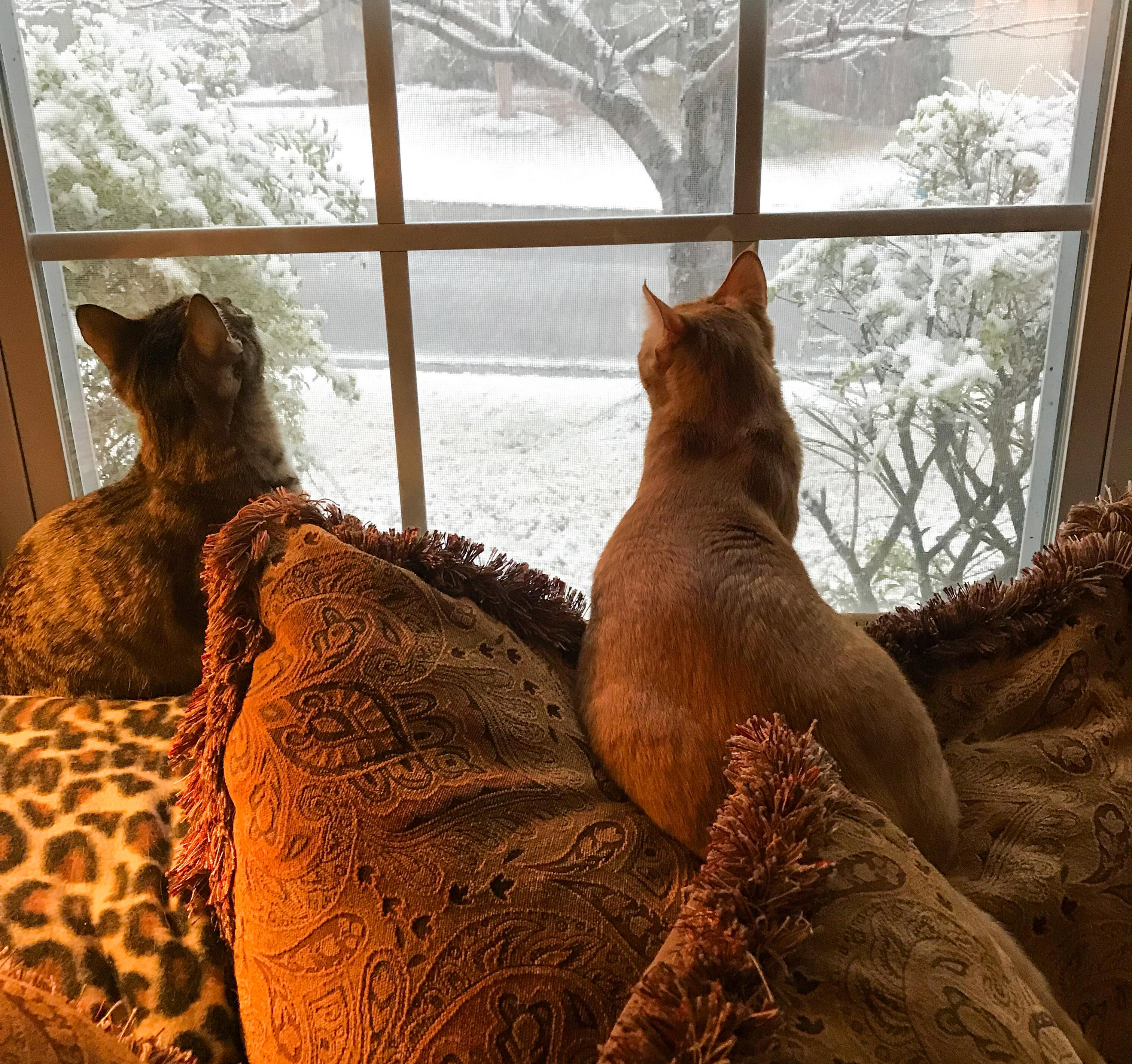 Ranger & Marmalade watching the snow