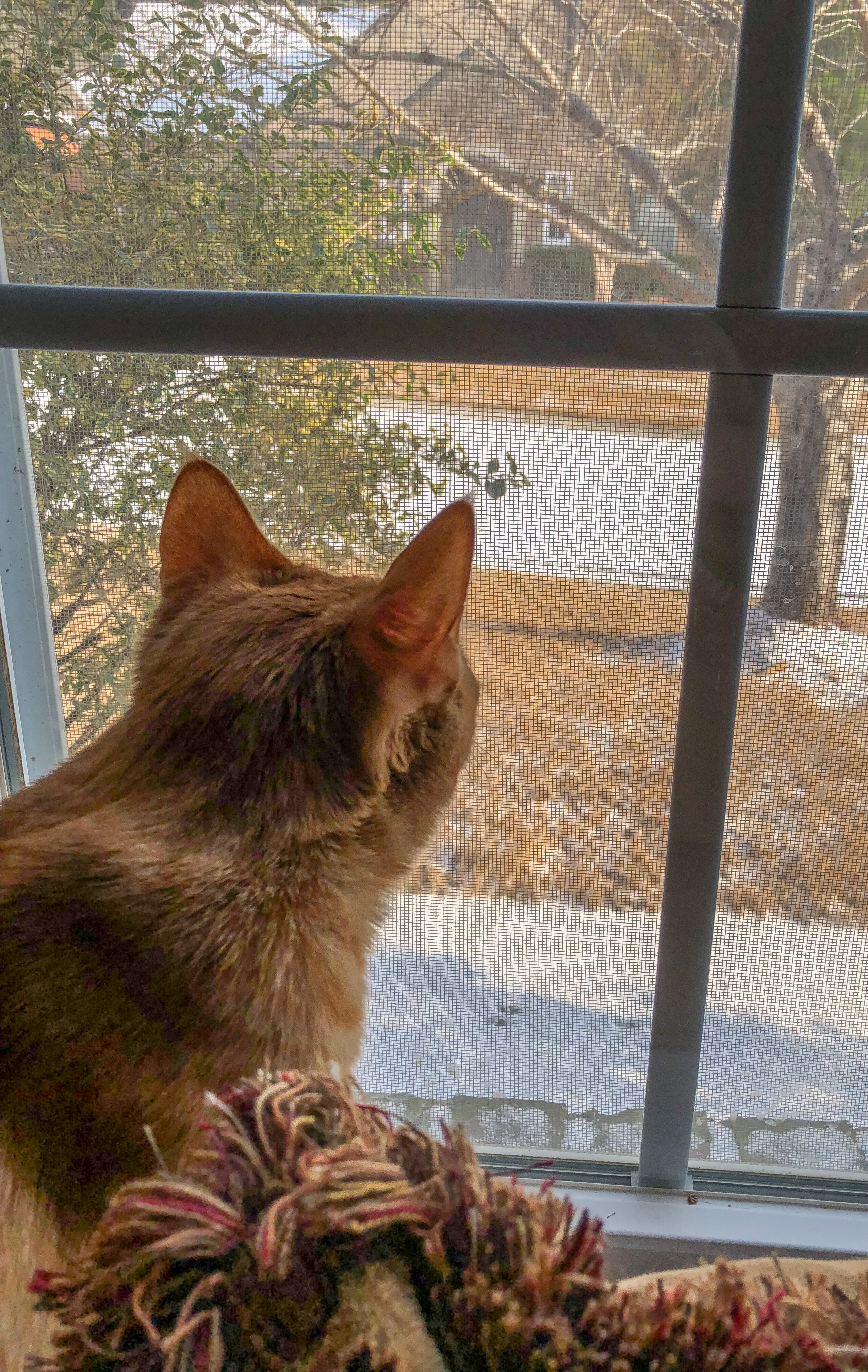 Marmalade watching the snow