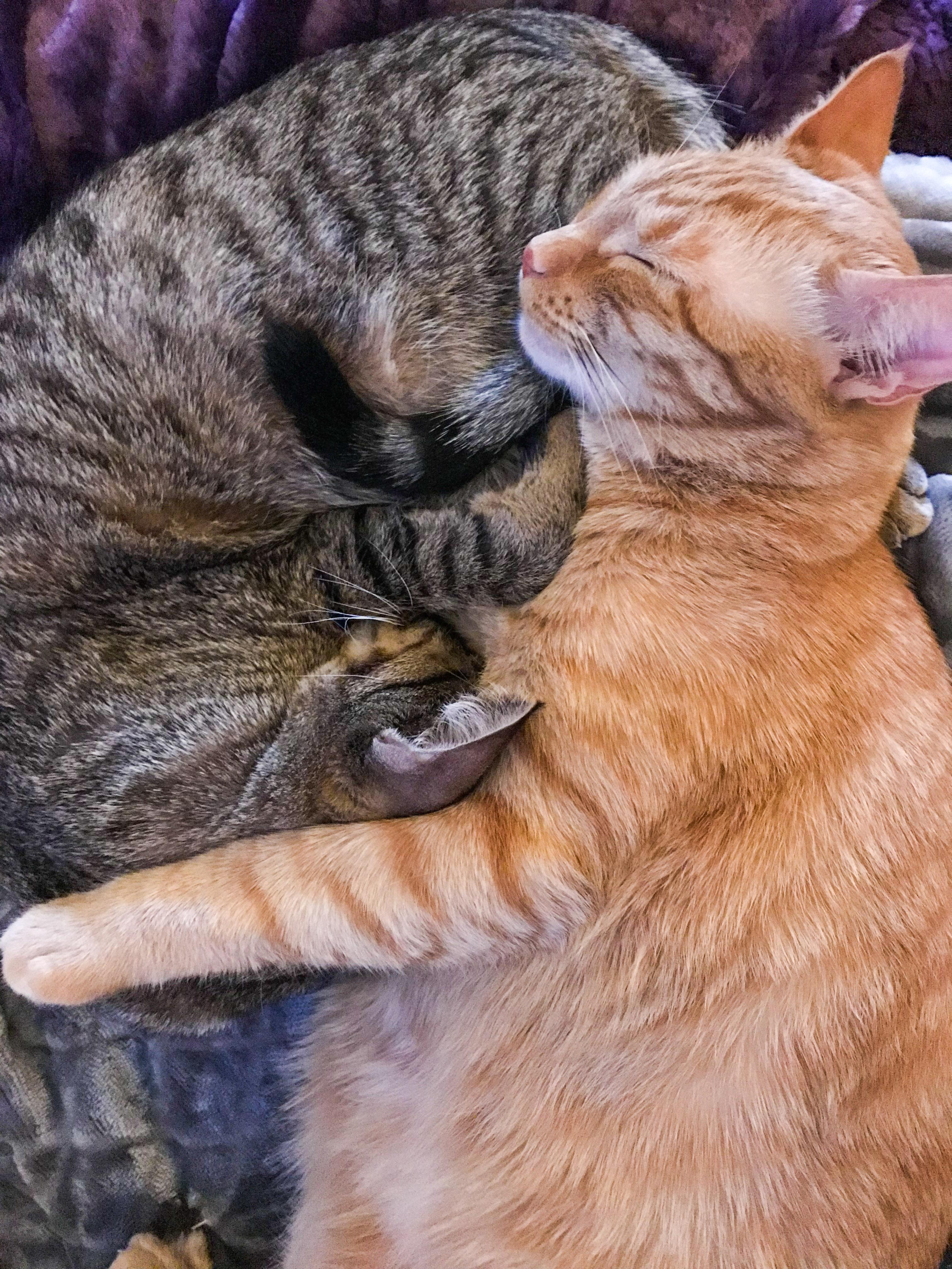 Ranger & Marmalade Curled Together