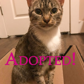 Sophie Adopted