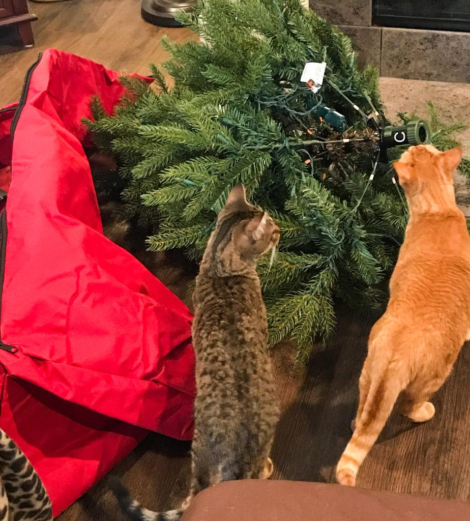 Ranger & Marmalade - Christmas Tree