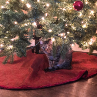 Ranger under the tree