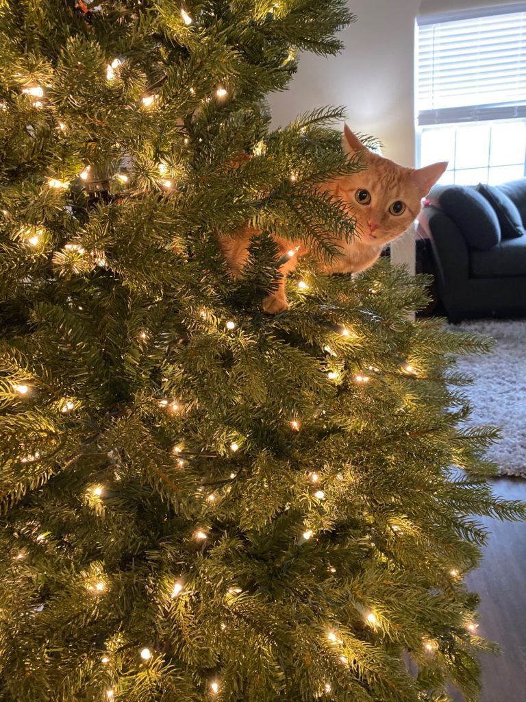 Marmalade in Christmas Tree