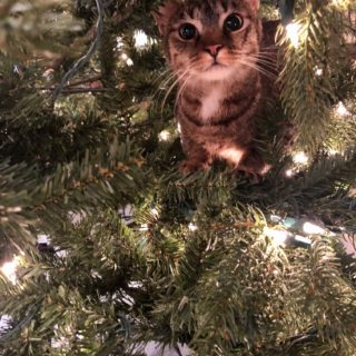 Ranger in Christmas Tree