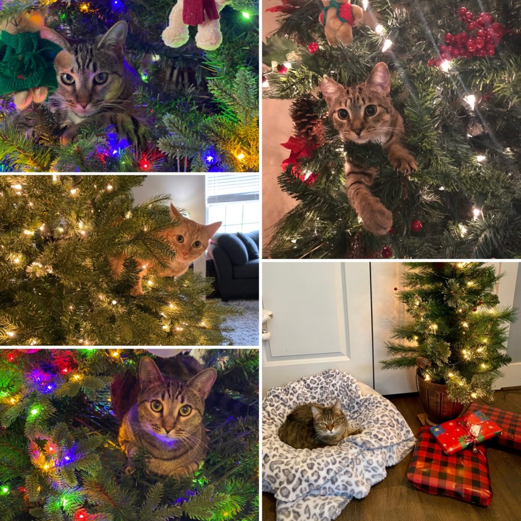 Tabby Tuesday Christmas 2020