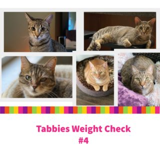 Tabbies Weight Check #4